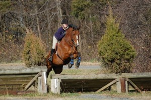 Glendon Mohan with Ayrton, schooling cross country jumps at Frying Pan Park